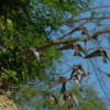 Monitoring bregunica na rijeci Dravi