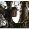 Postavljanje kućica za ptice